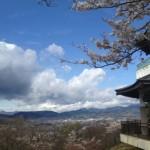 秦野桜まつり 弘法山公園会場2000本の桜