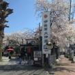 伊勢原大神宮の桜