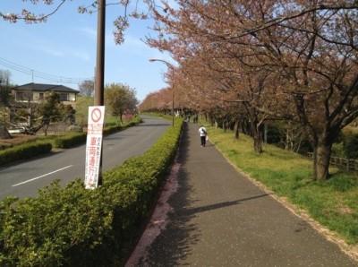 伊勢原総合運動公園への道