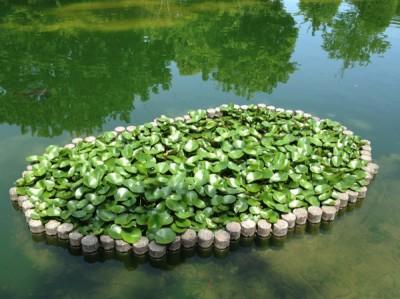 上府中公園 池の植物がいい味