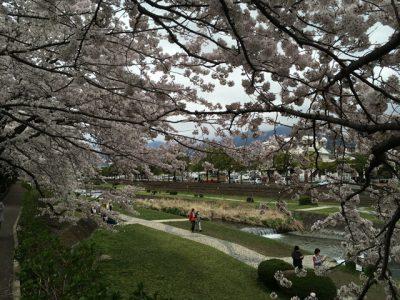 桜の樹をフレームみたいに活用